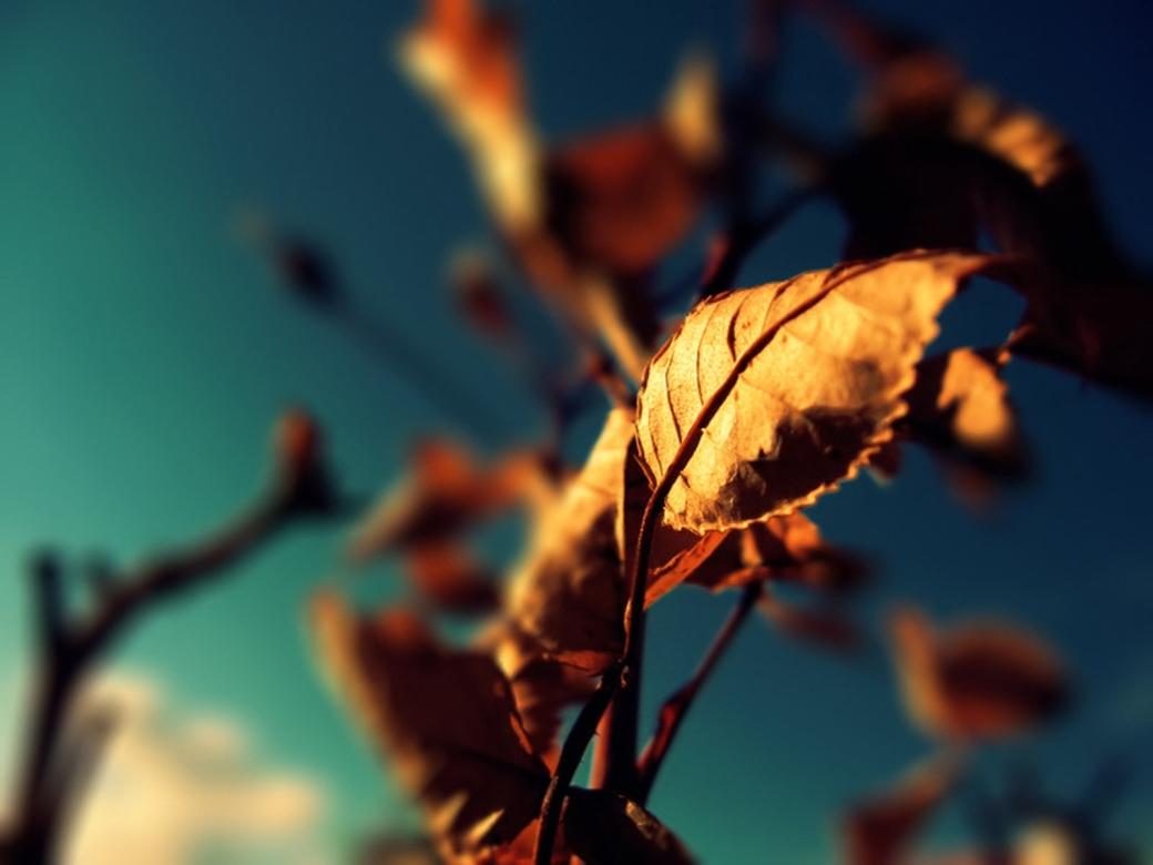 Kidsplay_autumn_3